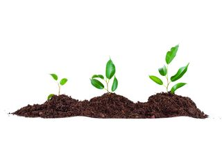 Bigstock-Three-plants-in-soil-Isolated-26041667